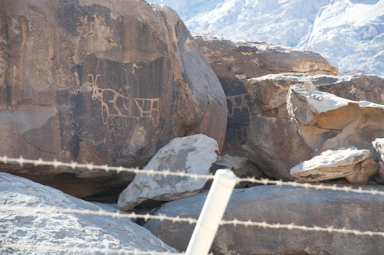 Golden calf carved on a rock in Saudi Arabia