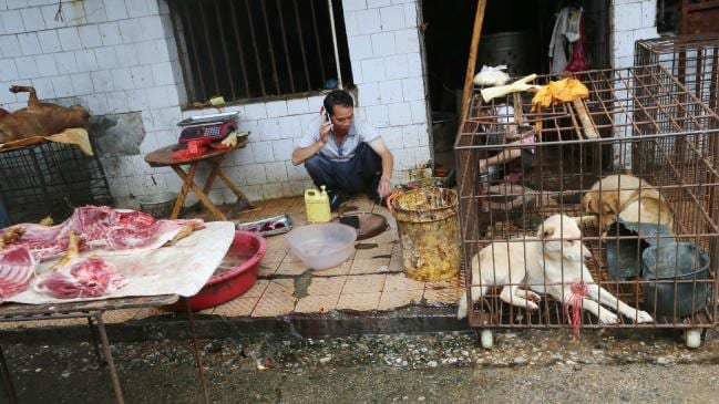 Live animal markets like this one in China have been blamed for COVID-19 the Coronavirus