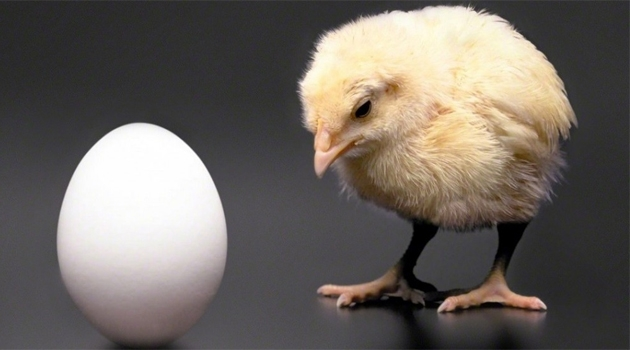 The chicken or the egg?