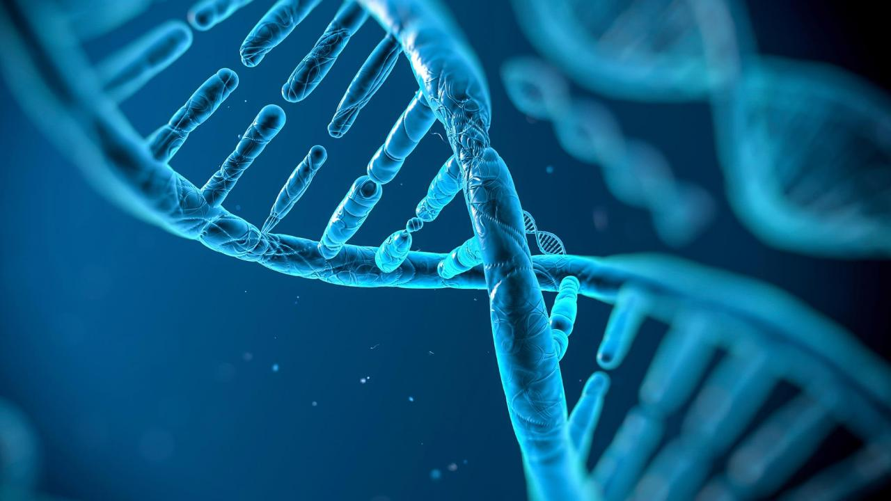 DNA human genome inside the chromosomes