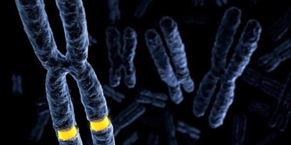 X-chromosome division