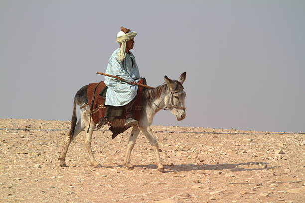 Donkey riding in the desert